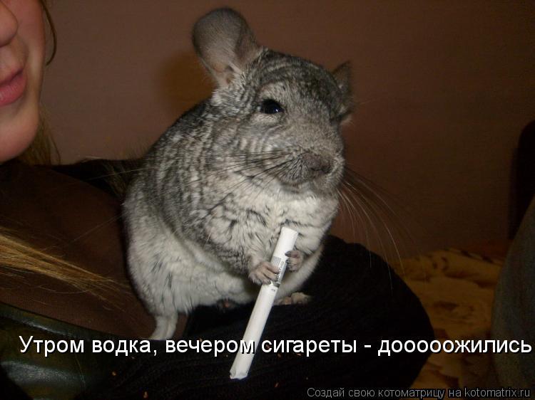 Котоматрица: Утром водка, вечером сигареты - дооооожились
