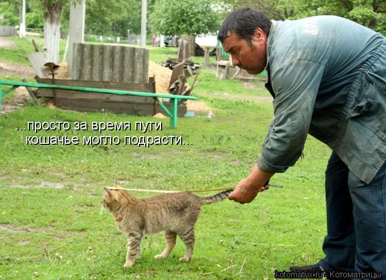 Котоматрица: ...просто за время пути кошачье могло подрасти...