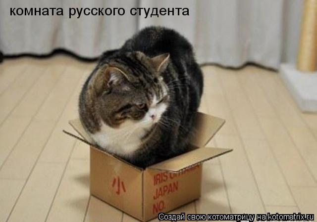 Котоматрица: комната русского студента
