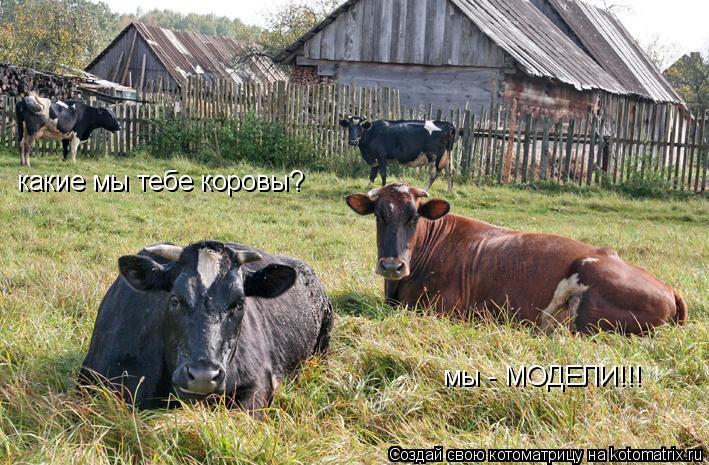 Котоматрица: какие мы тебе коровы? мы - МОДЕЛИ!!!