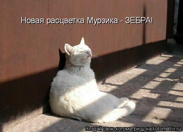 Котоматрица: Новая расцветка Мурзика - ЗЕБРА!