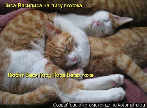 Котоматрица: Киса-Василиса на лису похожа, Любит Вася Кису, Киса Васю тоже