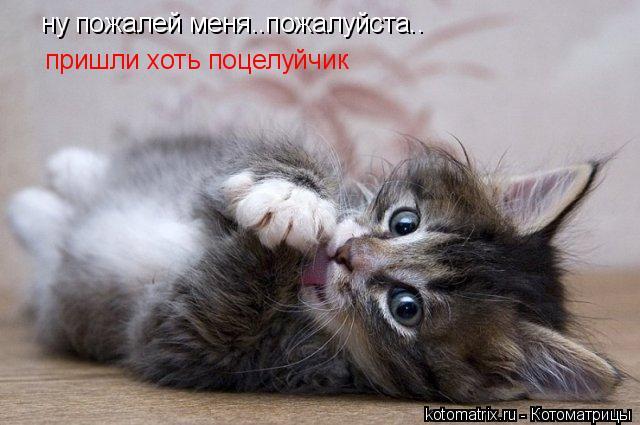 Котоматрица: ну пожалей меня..пожалуйста.. пришли хоть поцелуйчик