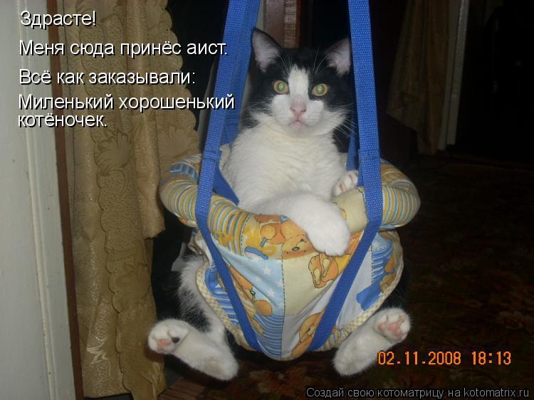 Котоматрица: Здрасте! Меня сюда принёс аист. Всё как заказывали: Миленький хорошенький котёночек.