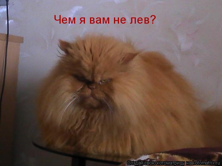 Котоматрица: Чем я вам не лев?