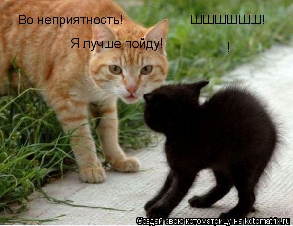 Котоматрица: ШШШШШШ! Во неприятность! Я лучше пойду! !