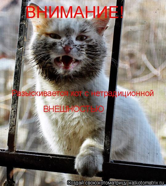 Котоматрица: ВНИМАНИЕ! Разыскивается кот с нетрадиционной ВНЕШНОСТЬЮ