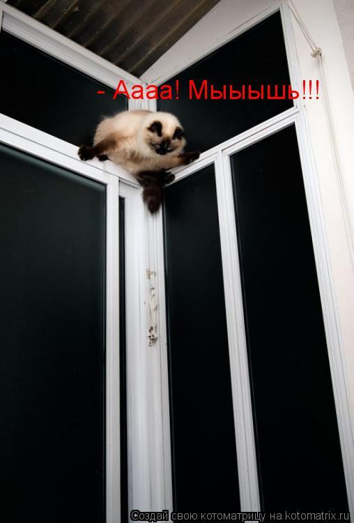 Котоматрица: - Аааа! Мыыышь!!!