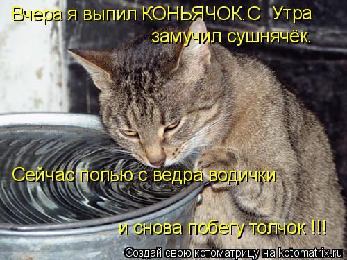 Котоматрица: Вчера я выпил КОНЬЯЧОК.С Утра  замучил сушнячёк. Сейчас попью с ведра водички и снова побегу толчок !!!