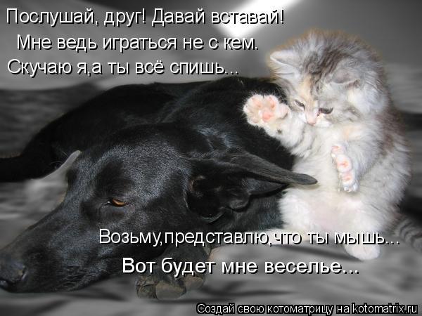Котоматрица: Послушай, друг! Давай вставай! Мне ведь играться не с кем. Скучаю я,а ты всё спишь... Возьму,представлю,что ты мышь... Вот будет мне веселье...