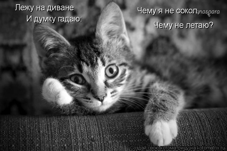 Котоматрица: Лежу на диване И думку гадаю: Чему я не сокол, Чему не летаю?