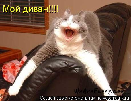 Котоматрица: Мой диван!!!!