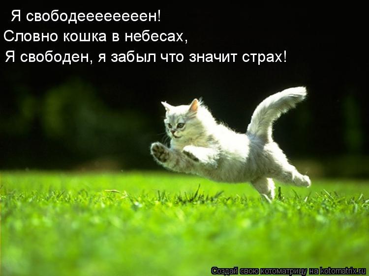 Котоматрица: Я свободеееееееен! Словно кошка в небесааааах!  Я свободеееееееен!  Словно кошка в небесах, Я свободен, я забыл что значит страх!