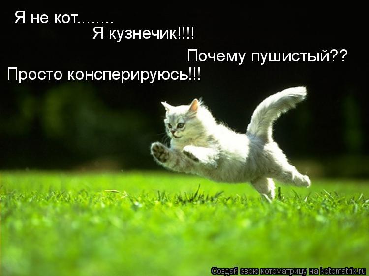 Котоматрица: Я не кот........ Я кузнечик!!!! Почему пушистый?? Просто консперируюсь!!!