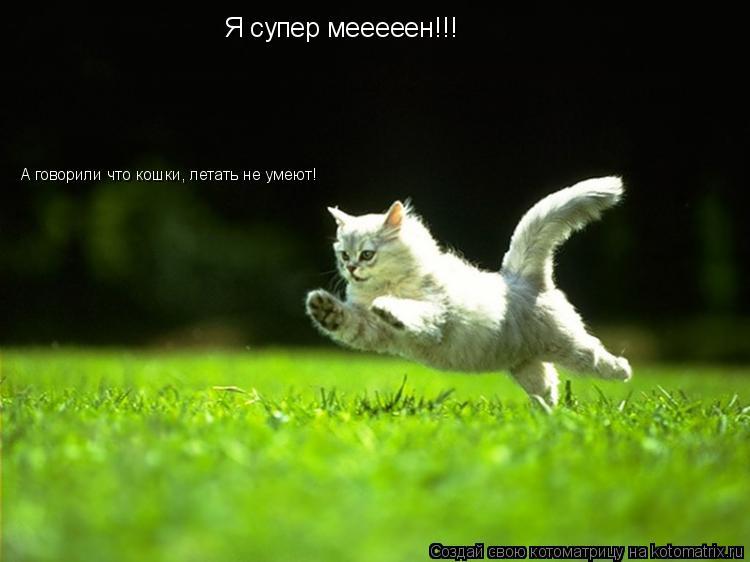 Котоматрица: Я супер мееееен!!! А говорили что кошки, летать не умеют!