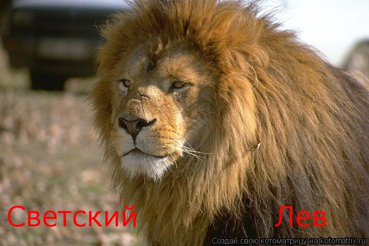 Котоматрица: Светский              Лев