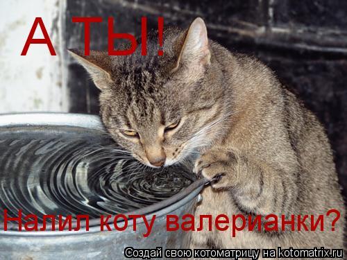 Котоматрица: А ТЫ! Налил коту валерианки?