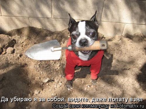 Котоматрица: Да убираю я за собой, видите, даже лопату взял