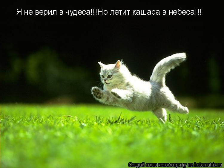 Котоматрица: Я не верил в чудеса!!!Но летит кашара в небеса!!!