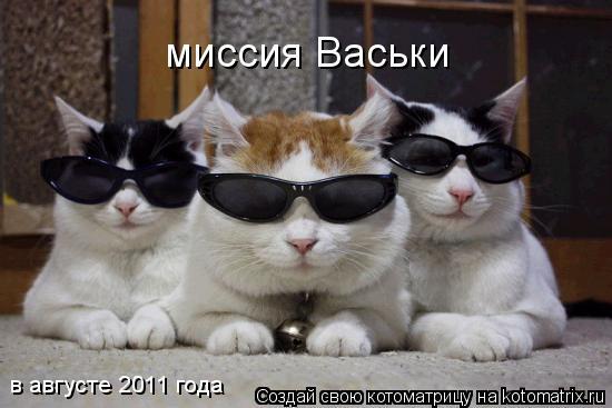 Котоматрица: миссия Васьки в августе 2011 года