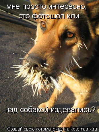 Котоматрица: мне просто интересно,  это фотошоп или  над собакой издевались?