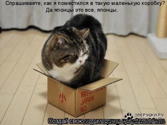 Котоматрица: Спрашиваете, как я поместился в такую маленькую коробку? Да японцы это все, японцы.