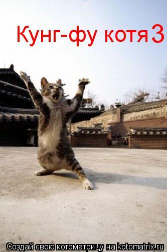 Котоматрица: Кунг-фу котя 3