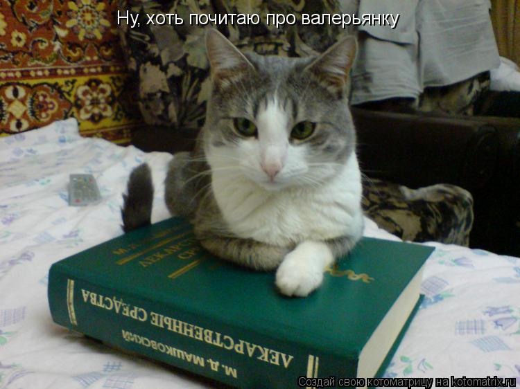 Котоматрица: Ну, хоть почитаю про валерьянку