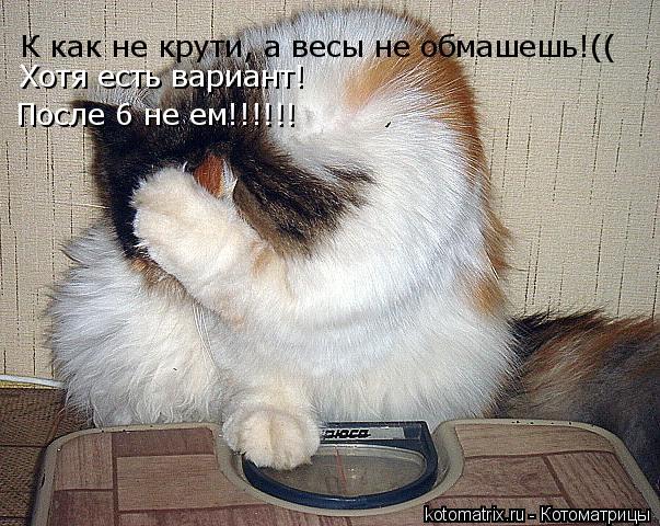 Котоматрица: К как не крути, а весы не обмашешь!(( Хотя есть вариант!  После 6 не ем!!!!!!