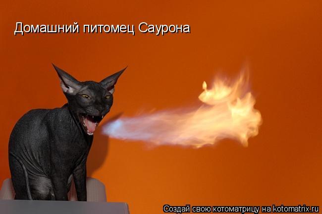Котоматрица: Домашний питомец Саурона