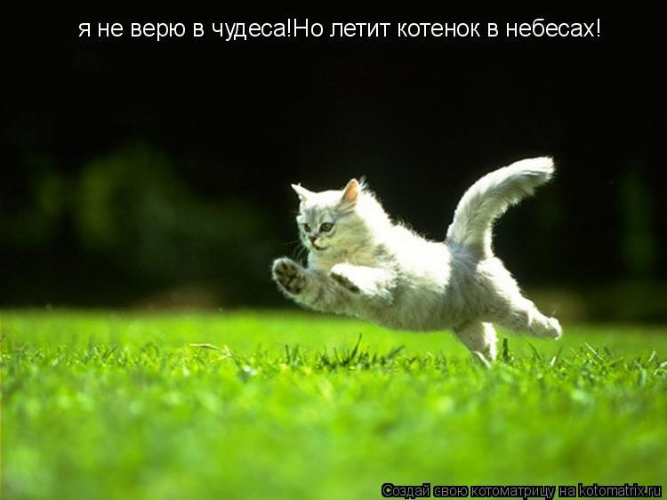 Котоматрица: я не верю в чудеса!Но летит котенок в небесах!