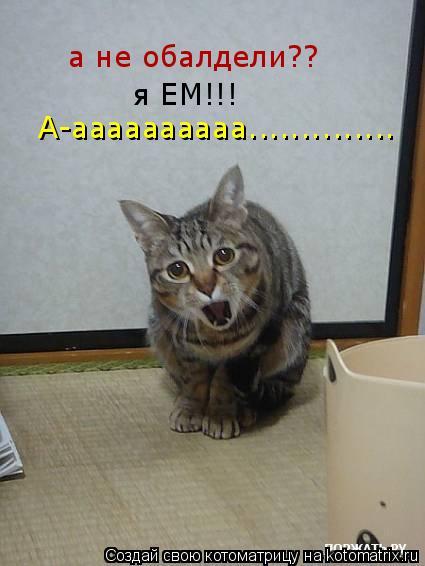 Котоматрица: а не обалдели?? я ЕМ!!! А-аааааааааа..............