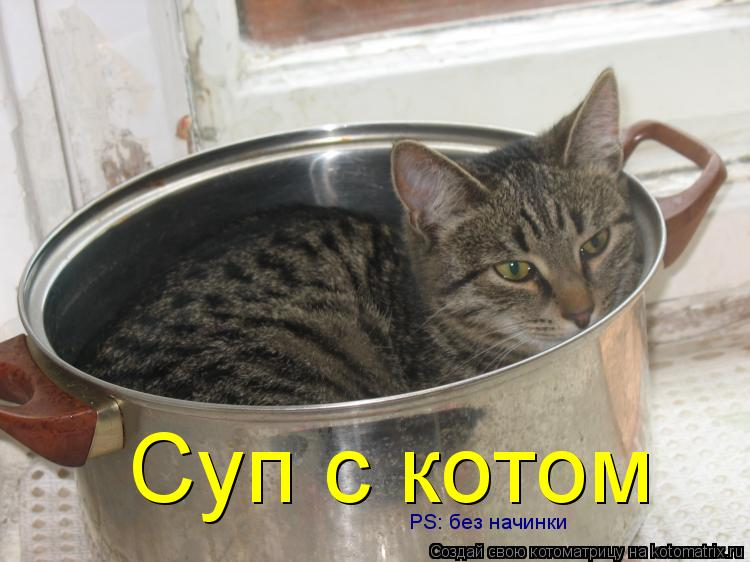 Котоматрица: Суп с котом PS: без начинки