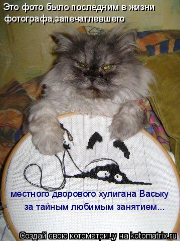 Котоматрица: Это фото было последним в жизни фотографа,запечатлевшего местного дворового хулигана Ваську за тайным любимым занятием...