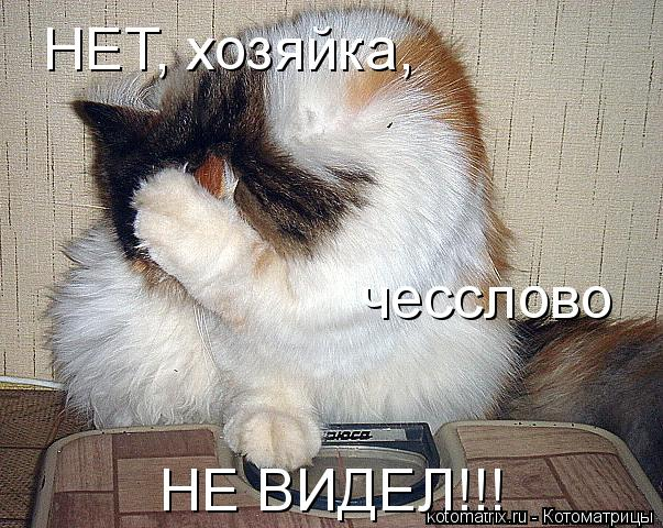 Котоматрица: НЕТ, хозяйка, чесслово НЕ ВИДЕЛ!!!