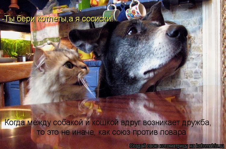 Котоматрица: Когда между собакой и кошкой вдруг возникает дружба,  то это не иначе, как союз против повара -Ты бери котлеты,а я сосиски!