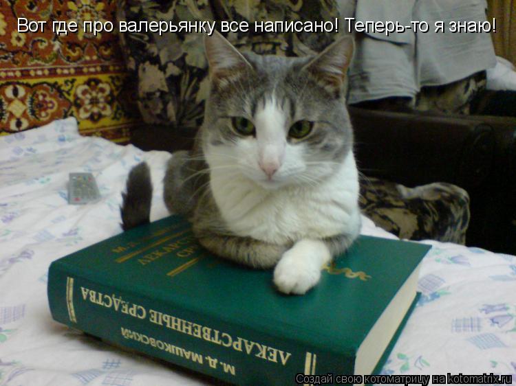 Котоматрица: Вот где про валерьянку все написано! Теперь-то я знаю!