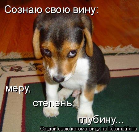 Котоматрица: Сознаю свою вину: меру, степень, глубину...