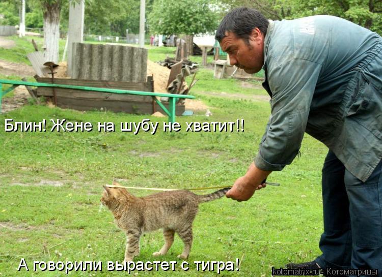 Котоматрица: Блин! Жене на шубу не хватит!! А говорили вырастет с тигра!