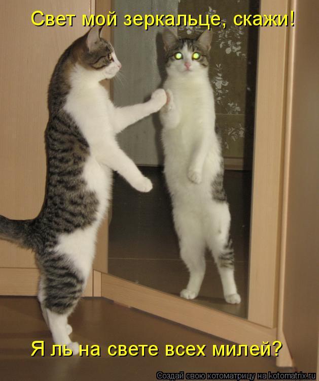 Котоматрица: Свет мой зеркальце, скажи!  Я ль на свете всех милей?