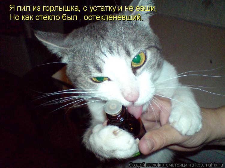 Котоматрица: Я пил из горлышка, с устатку и не евши,  Но как стекло был — остекленевший.