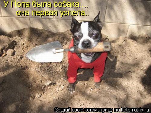 Котоматрица: У Попа была собака....  она первая успела..