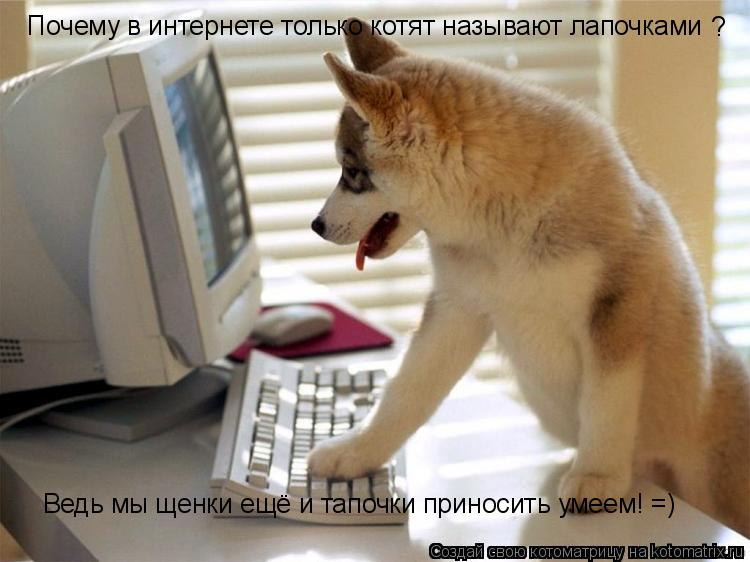 Котоматрица: Почему в интернете только котят называют лапочками ? Ведь мы щенки ещё и тапочки приносить умеем! =)