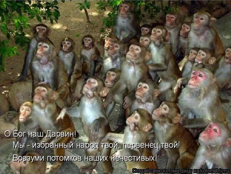 Котоматрица: О Бог наш Дарвин!  Мы - избранный народ твой, первенец твой! Вразуми потомков наших нечестивых!