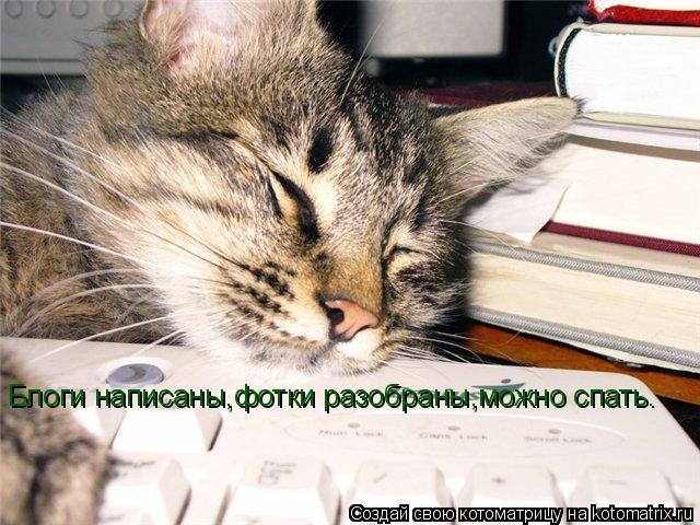 Котоматрица: Блоги написаны,фотки разобраны,можно спать.