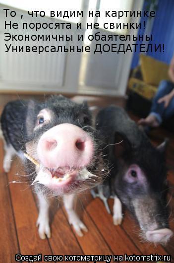 Котоматрица: То , что видим на картинке  Не поросята и не свинки! Экономичны и обаятельны Универсальные ДОЕДАТЕЛИ!