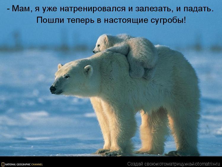 http://kotomatrix.ru/images/lolz/2010/11/12/735843.jpg