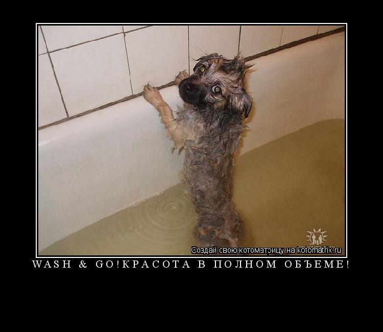Котоматрица: WASH & GO!КРАСОТА В ПОЛНОМ ОБЪЁМЕ!