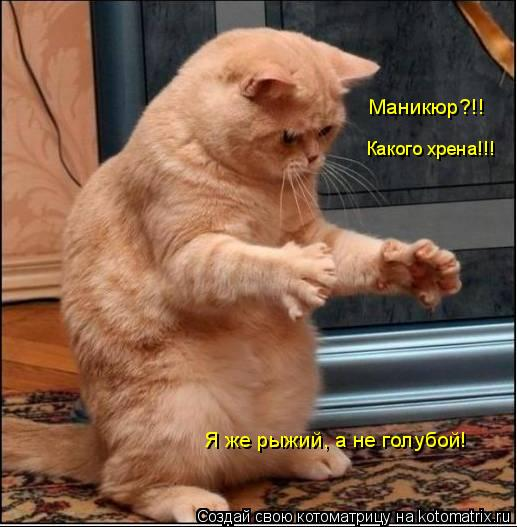 Котоматрица: Маникюр?!! Какого хрена!!! Я же рыжий, а не голубой!
