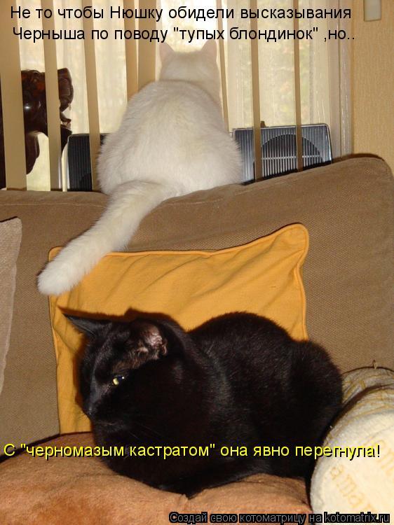 """Котоматрица: Не то чтобы Нюшку обидели высказывания Черныша по поводу """"тупых блондинок"""" ,но.. С """"черномазым кастратом"""" она явно перегнула!"""